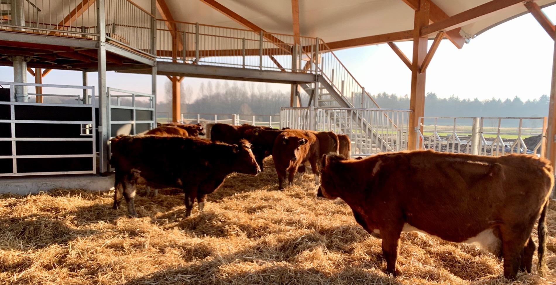 The roundhouse is een unieke shelter voor de kudde van Erve Vechtdal